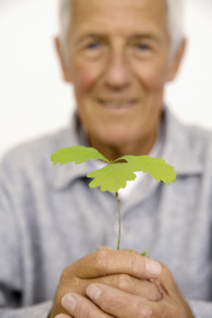 man field: Senior holding plant in hands, close-up Stock Photo