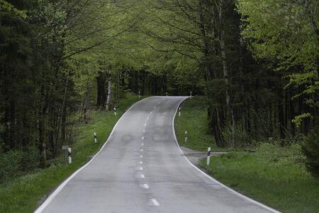 treelined: Germany, Bavaria, Schaeftlarn, treelined country road