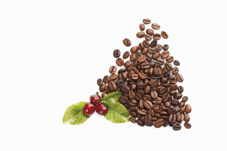 Fresh and roasted coffee beans in bowl photo