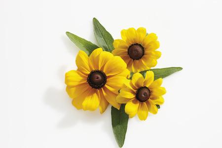 susan: Black-eyed Susan flowers (Rudbeckia hirta) Stock Photo