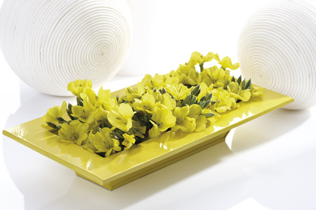 oenothera biennis: Evening primrose (Oenothera biennis) in yellow ceramic bowl