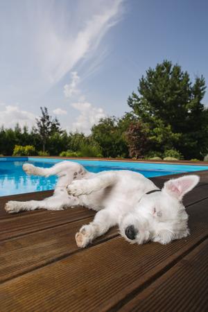 pet photography: Dog lying at swimming pool Stock Photo
