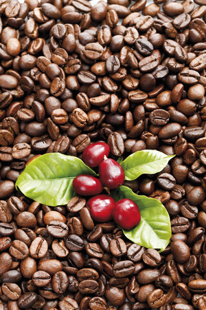 Fresh and roasted coffee beans photo