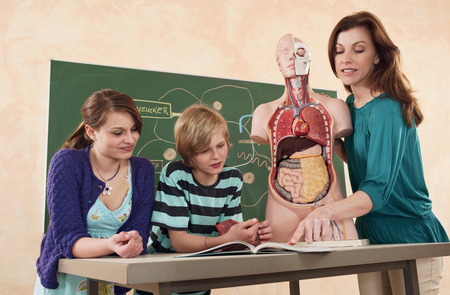 Teacher holding model of human body explaining students photo