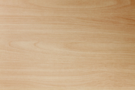 Bright beech wood background