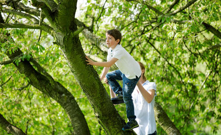 Mother helping child to climb on tree Stock Photo