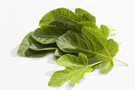 Fig feuilles isolées sur blanc