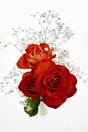 roses rouges: Roses rouges avec Gypsophila Banque d'images