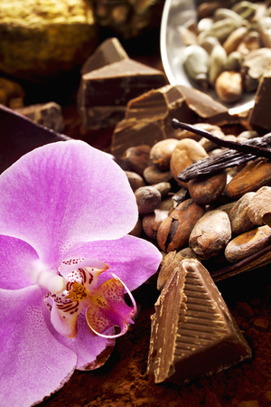 cocoa beans: Cocoa beans, cocoa fruit, chocolate, orchidee blossom