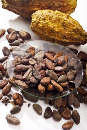 cacao beans: Granos de cacao en taz�n de cacao y frutas Foto de archivo