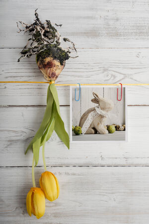 bulb tulip: Tulip bulb and picture with easter bunny hanging on ribbon