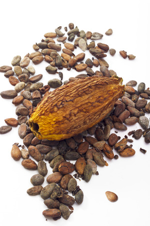 cocoa fruit: Cocoa fruit and cocoa beans