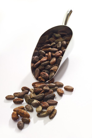 cacao beans: Los granos de cacao en peque�a pala Foto de archivo