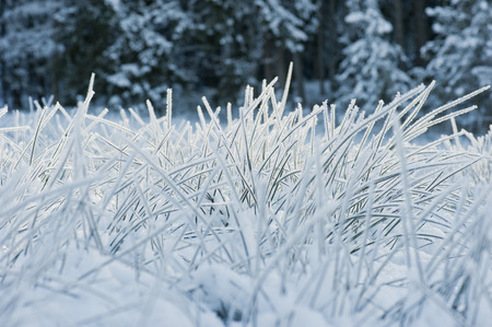 differential: Austria, Salzburg, Blades of grass covered in snow Stock Photo