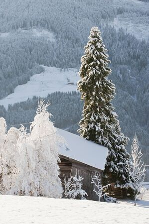 log cabin in snow: Austria, Salzburg, Snow-covered trees and hut in Altenmarkt-Zauchensee
