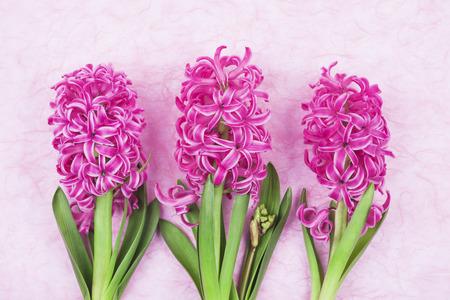 hyacinths: Pink hyacinths on pink background Stock Photo