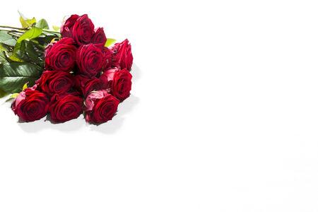 rosas rojas: Las rosas rojas sobre fondo blanco