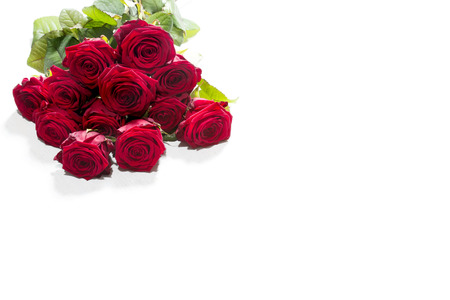 roses rouges: Roses rouges sur fond blanc