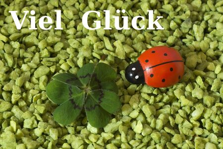 cloverleaves: Greeting Card, Cloverleaf and ladybird Stock Photo