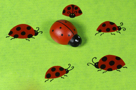 coccinellidae: Greeting card with ladybirds