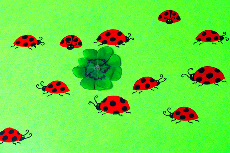 cloverleaves: Greeting card with ladybirds and cloverleaf Stock Photo