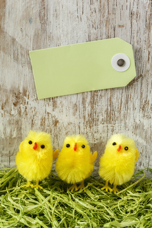 twee: Eastern, chick figurines on artificial grass, Easter card Stock Photo