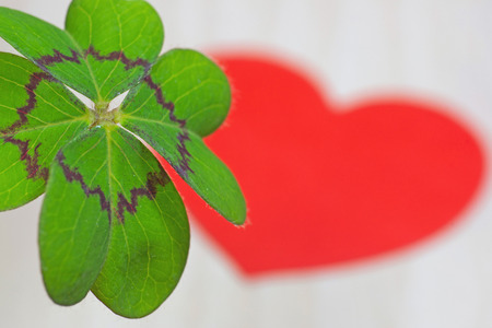 cloverleaves: Cloverleaf and red heart Stock Photo