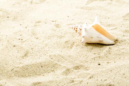 Clam at beach photo