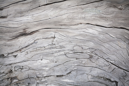 Cracks and structures in wood