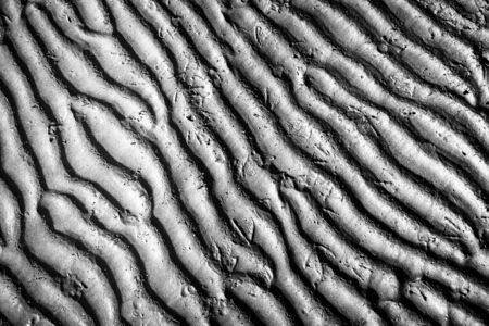 ebb: Rippled sand structure at low tide with bird foot marks
