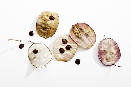 honestidad: Franquezas, Lunaria annua