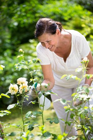 maintaining: Woman maintaining flowers in garden