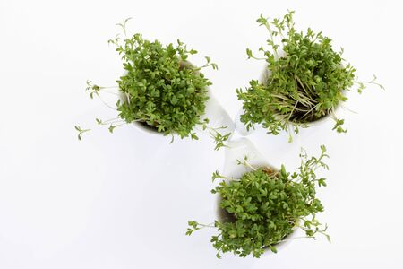 Garden cress in bowls