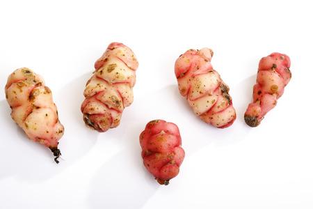 woodsorrel: Mashua, Oxalis tuberosa