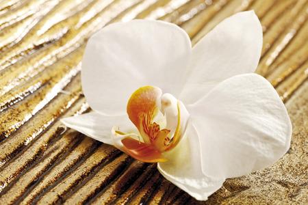 bodegones: Blanco, flor de la orqu�dea en la madera