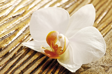 still lifes: White orchid blossom on wood Stock Photo