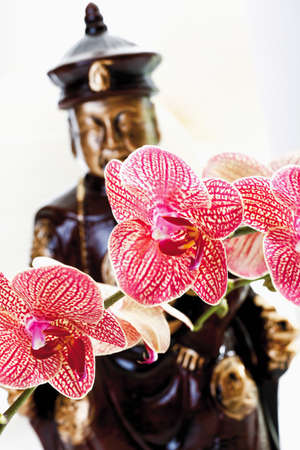 mustered: Red mustered orchid and buddha figurine