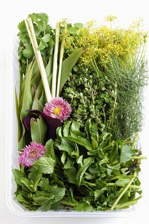herbs wild: Hierbas silvestres mixtos