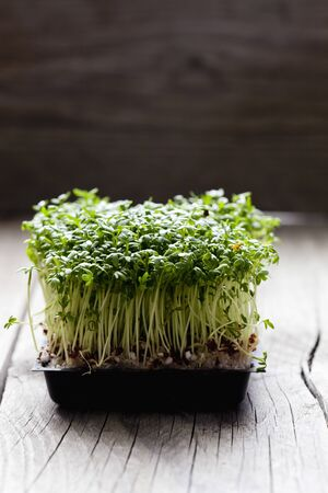 cress: Garden cress, sprouts on wood
