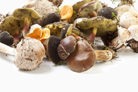 campestris: Variety of mushrooms on white background, close up