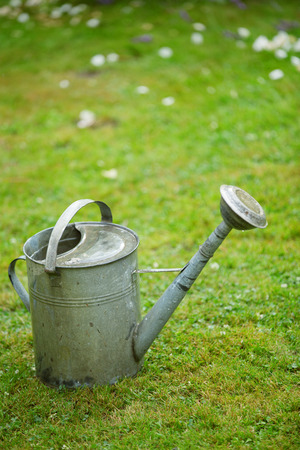 Watering can on greengrass