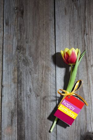 birthday present: Tulip with Happy Birthday card on wood