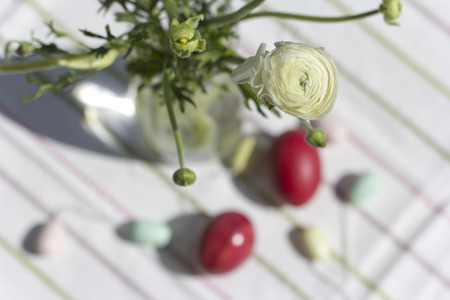 persian buttercup: White Persian buttercup over Easter eggs Stock Photo