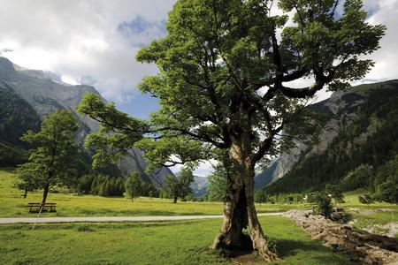 tyrol: Austria, Tyrol, Trees in landscape Stock Photo