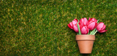 flowerpot: Flowerpot with pink tulips on grass, copy space