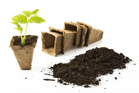 turba: Planta de frambuesa, el suelo, macetas de turba en el fondo blanco Foto de archivo