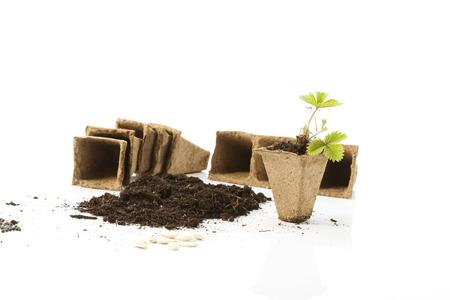 turba: Plantas, el suelo, macetas de turba y semillas de fresa en el fondo blanco