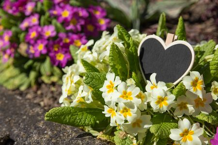 copy  space: Heart-shaped copy space on primroses