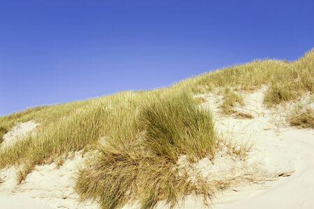 sea grass: Germany, Baltic sea, Grass on sand dune Stock Photo