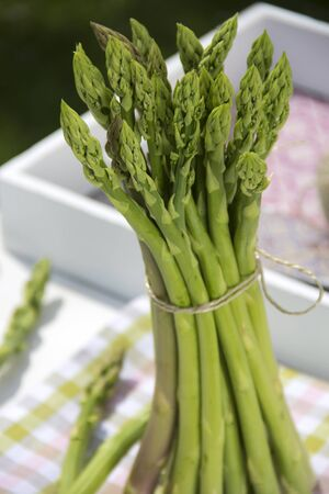 checked: Bunch of green asparagus on checked cloth Stock Photo